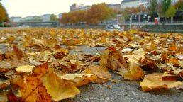 autunno-vienna-austria-colori-stagione-foglie-natura (7)